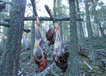 wild game meat hanging
